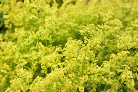 19-New-Covent-Garden-Flower-Market-Flowerona_170929_130930.jpg?mtime=20170929130930#asset:12172