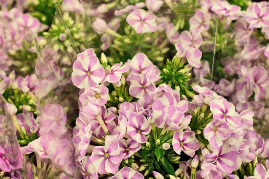 2-New-Covent-Garden-Flower-Market-Flowerona_170929_134042.jpg?mtime=20170929134042#asset:12222