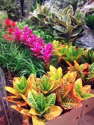 2012-01-Arnott-indoor-plants.jpg?mtime=20171003170552#asset:12814
