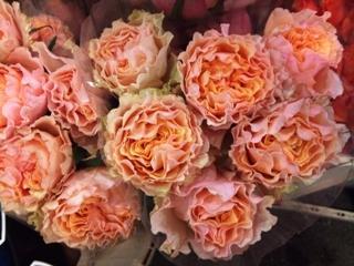 2012-01-campanella-peach.jpg?mtime=20171003170749#asset:12824