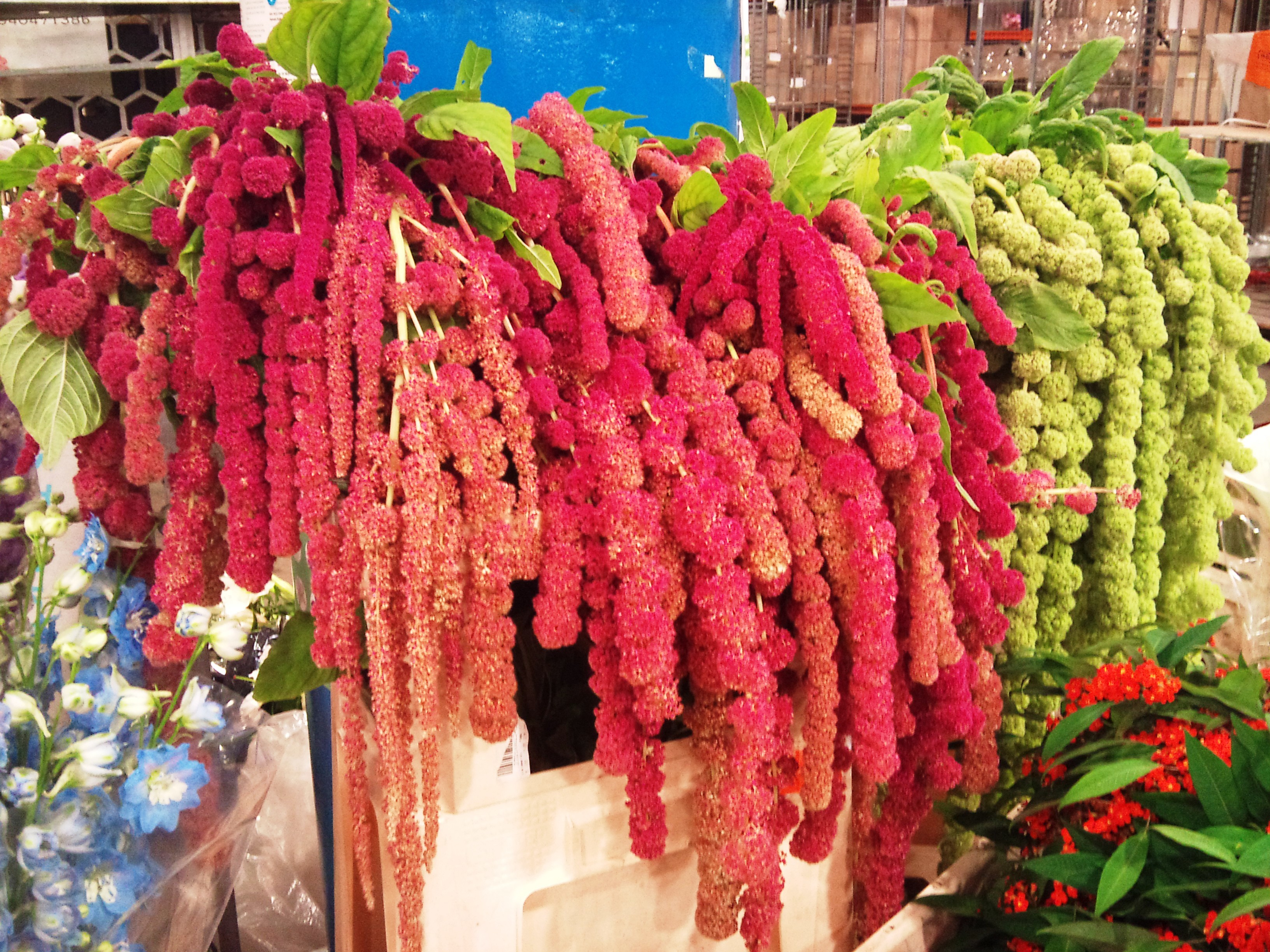 2012-09-love-lies-bleeding.jpg?mtime=20171003163205#asset:12731