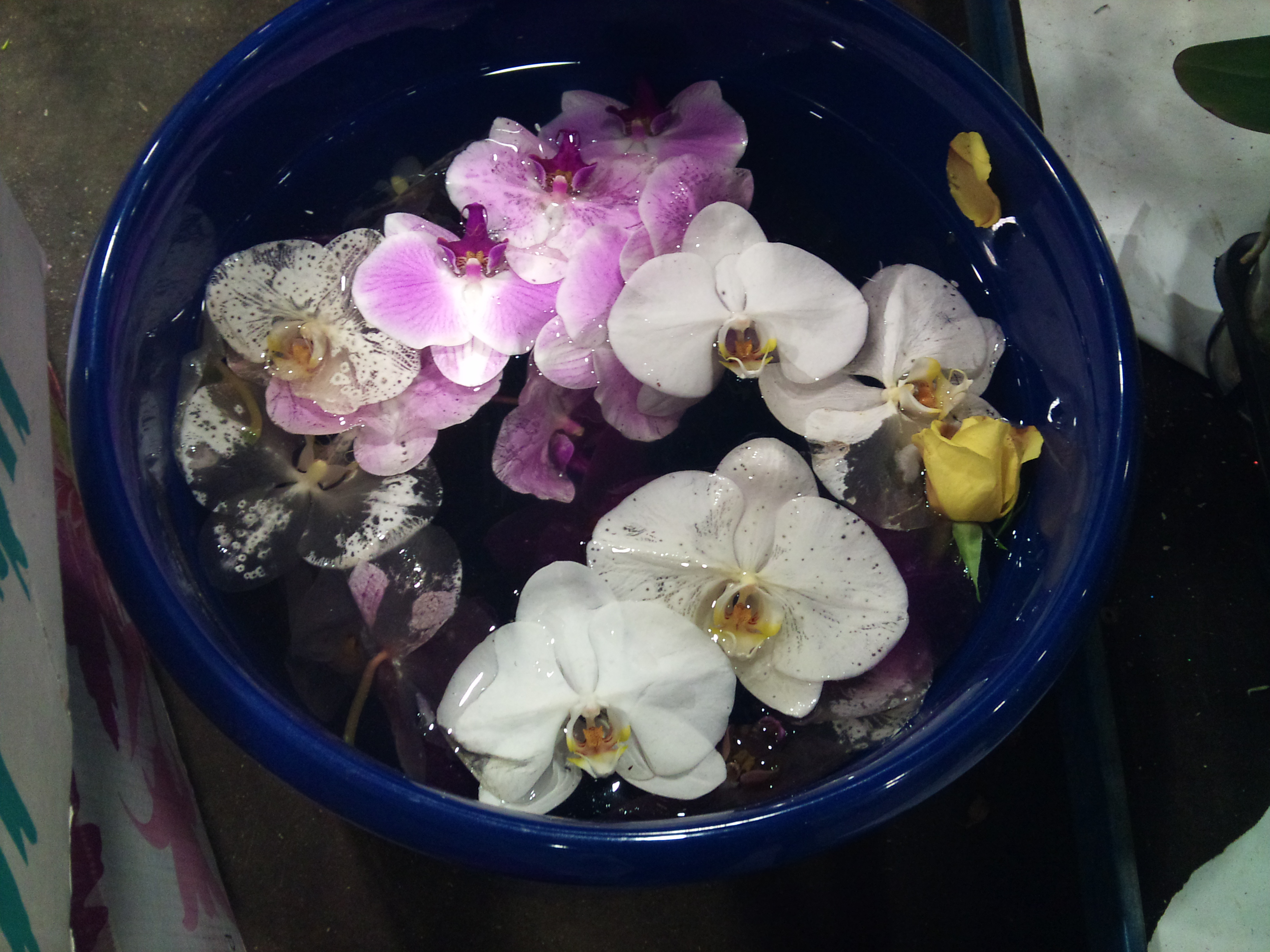 2012-11-orchid-spa.jpg?mtime=20171003160401#asset:12699