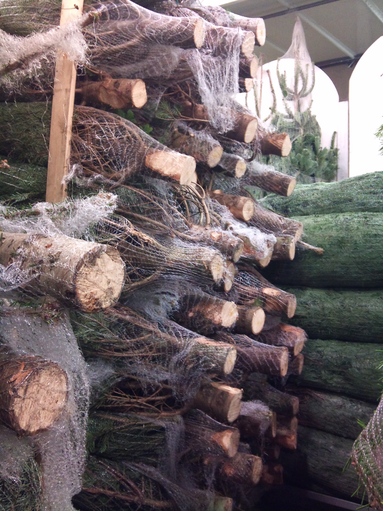 2012-12-fresh-cut-trees.jpg?mtime=20171003154105#asset:12640