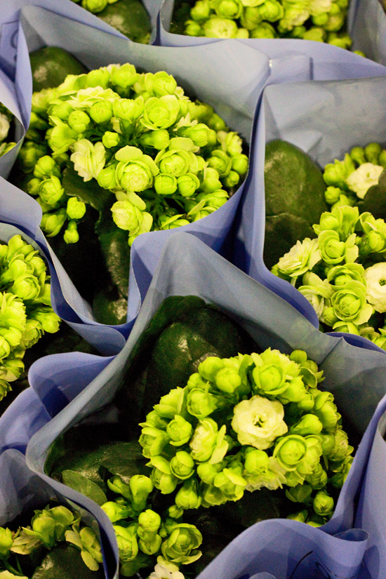 2013-02-Image-17-Quality-Plants-Kalanchoe-Flowerona.jpg?mtime=20171003151746#asset:12567