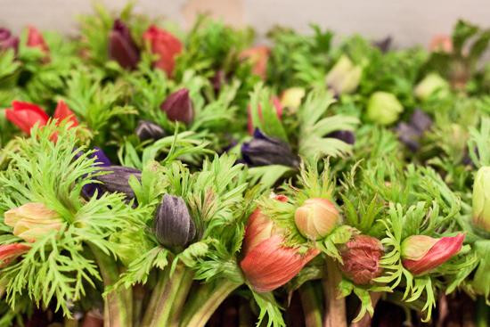 2013-03-13-British-anemones-Flowerona.jpg?mtime=20170929144908#asset:12339
