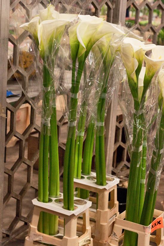 2013-03-17-English-Arum-Lilies-Flowerona.jpg?mtime=20170929144910#asset:12343