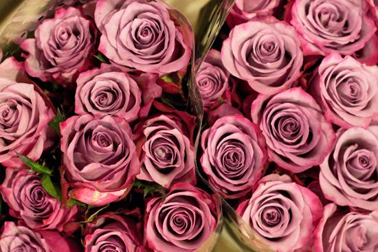 2013-03-24-Deep-Purple-roses-Flowerona.jpg?mtime=20170929144915#asset:12350