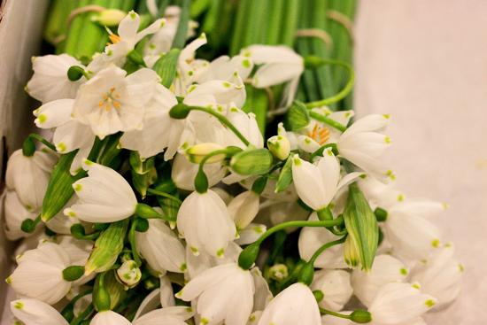 2013-03-6-Snowflakes-Flowerona.jpg?mtime=20170929144904#asset:12332