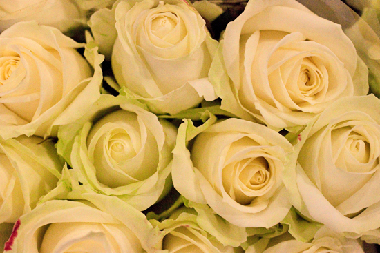 2013-04-19-Avalanche-Rose-Zest-Flowers-New-Covent-Garden-Flower-Market-Flowerona.jpg?mtime=20170929143156#asset:12315