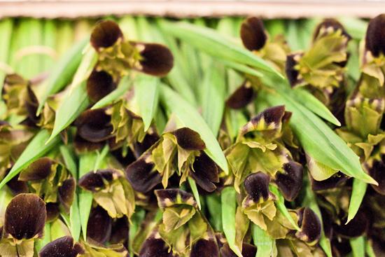 2013-04-25-Widow-Iris-Pratley-New-Covent-Garden-Flower-Market-Flowerona-1.jpg?mtime=20170929143201#asset:12321