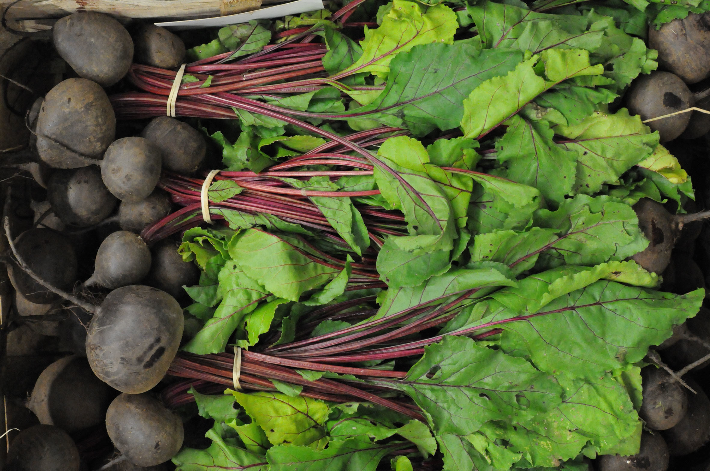 2013-09-01-Fruit-and-Veg-Market-Report-beetroot.jpg?mtime=20170922121304#asset:11427