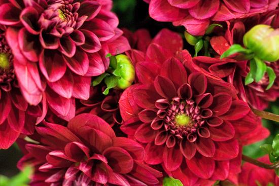 21-New-Covent-Garden-Flower-Market-Flowerona_170929_134056.jpg?mtime=20170929134056#asset:12241