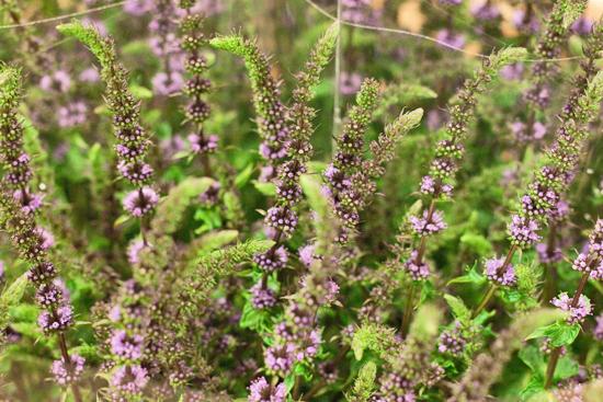 22-New-Covent-Garden-Flower-Market-Flowerona_170929_130932.jpg?mtime=20170929130932#asset:12175