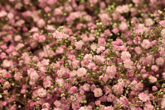 23-New-Covent-Garden-Flower-Market-Flowerona.jpg?mtime=20170928162354#asset:12045