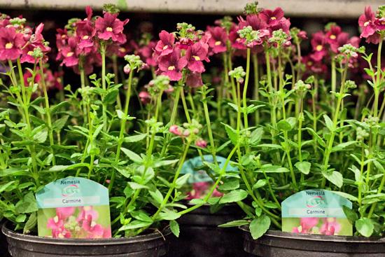 23-New-Covent-Garden-Flower-Market-Flowerona_170929_134057.jpg?mtime=20170929134057#asset:12243