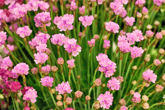 24-New-Covent-Garden-Flower-Market-Flowerona_170929_134058.jpg?mtime=20170929134058#asset:12244