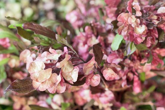 26-New-Covent-Garden-Flower-Market-Flowerona_170929_132922.jpg?mtime=20170929132921#asset:12213