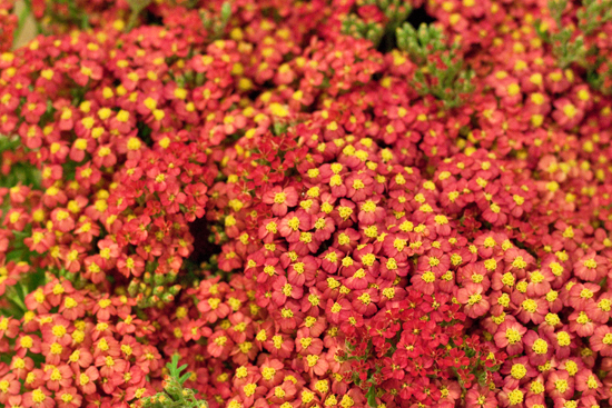 26-New-Covent-Garden-Flower-Market-Flowerona_170929_134100.jpg?mtime=20170929134100#asset:12246