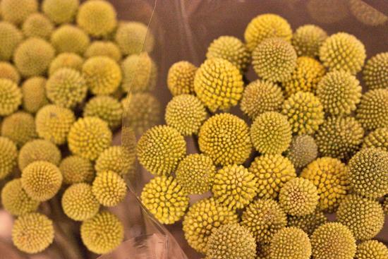 28-New-Covent-Garden-Flower-Market-Flowerona_170929_134101.jpg?mtime=20170929134101#asset:12248