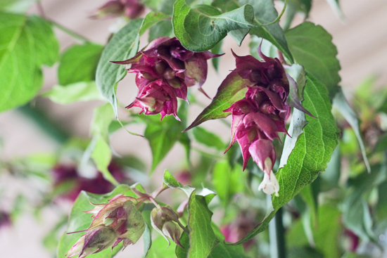 29-New-Covent-Garden-Flower-Market-Flowerona_170929_130936.jpg?mtime=20170929130936#asset:12182