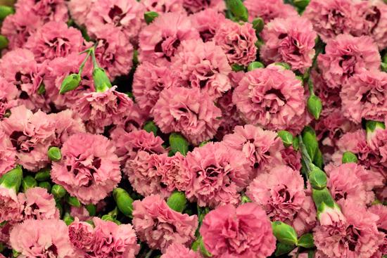 3-New-Covent-Garden-Flower-Market-Flowerona_170929_132903.jpg?mtime=20170929132903#asset:12190