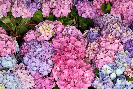 30-New-Covent-Garden-Flower-Market-Flowerona_170929_130936.jpg?mtime=20170929130936#asset:12183