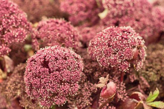 5-New-Covent-Garden-Flower-Market-Flowerona.jpg?mtime=20170928162341#asset:12027