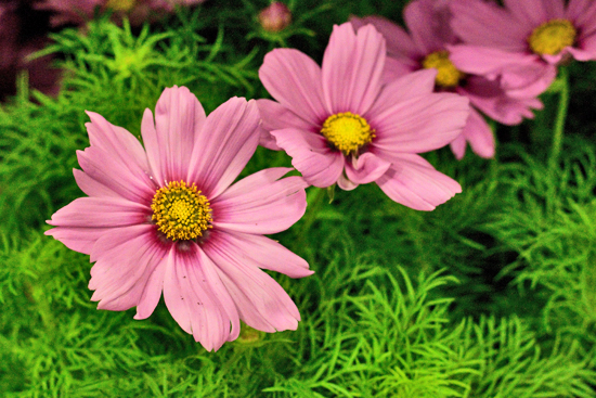6-New-Covent-Garden-Flower-Market-Flowerona_170929_130920.jpg?mtime=20170929130920#asset:12159