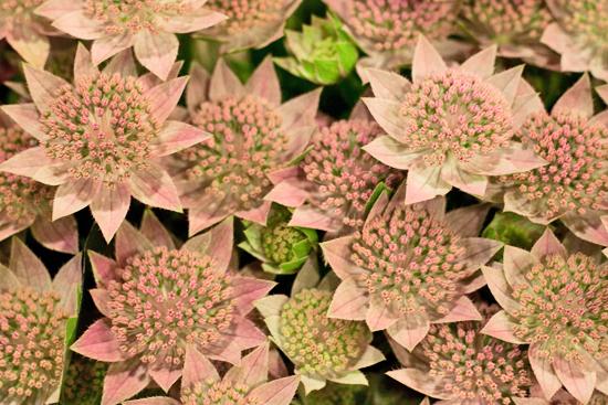 6-New-Covent-Garden-Flower-Market-Flowerona_170929_132906.jpg?mtime=20170929132906#asset:12193