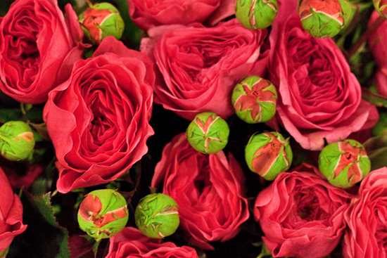 8-New-Covent-Garden-Flower-Market-Flowerona_170929_130922.jpg?mtime=20170929130921#asset:12161