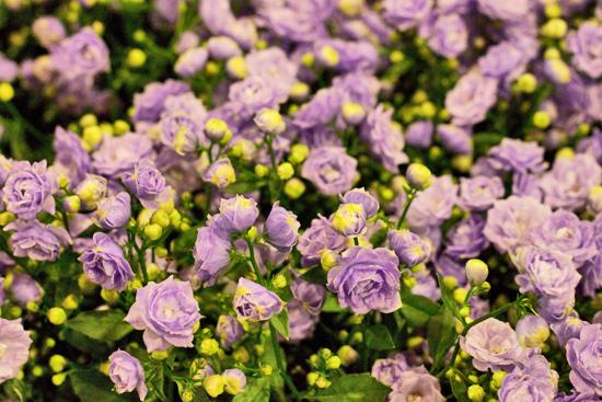 9-New-Covent-Garden-Flower-Market-Flowerona.jpg?mtime=20170928162344#asset:12031