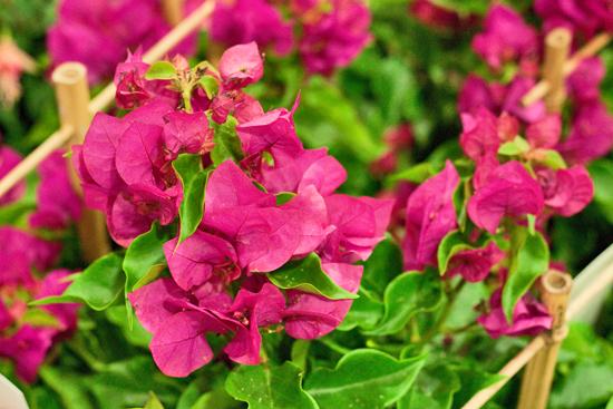 9-New-Covent-Garden-Flower-Market-Flowerona_170929_132908.jpg?mtime=20170929132908#asset:12196