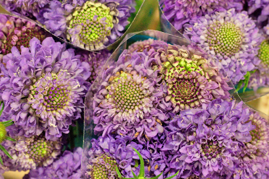 New-Covent-Garden-Flower-Market-April-Market-Report-Flowerona-17.jpg?mtime=20170913160635#asset:10319
