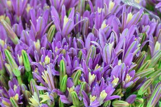 New-Covent-Garden-Flower-Market-August-Market-Report-Flowerona-19.jpg?mtime=20170913121032#asset:10105