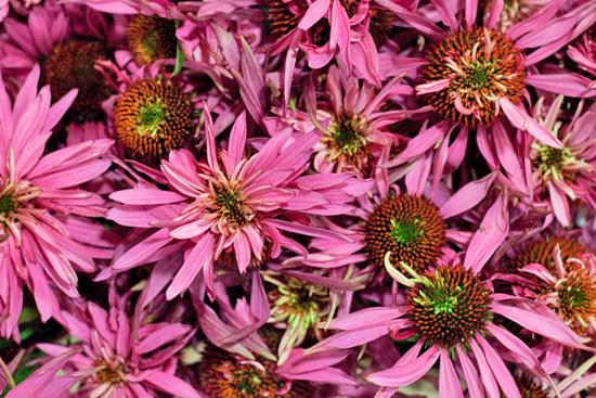 New-Covent-Garden-Flower-Market-August-Market-Report-Flowerona-3.jpg?mtime=20170913121114#asset:10089