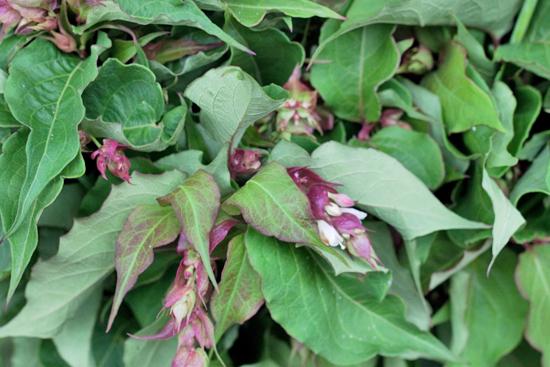 New-Covent-Garden-Flower-Market-August-Market-Report-Flowerona-30.jpg?mtime=20170913121122#asset:10116