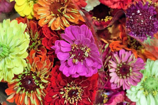New-Covent-Garden-Flower-Market-August-Market-Report-Flowerona-4.jpg?mtime=20170913121115#asset:10090