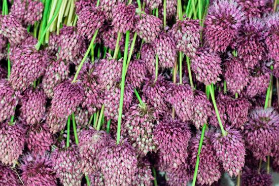 New-Covent-Garden-Flower-Market-August-Market-Report-Flowerona-7.jpg?mtime=20170913121117#asset:10093