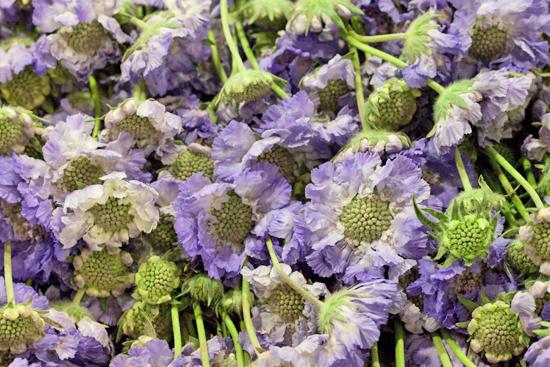 New-Covent-Garden-Flower-Market-August-Market-Report-Flowerona-8.jpg?mtime=20170913121118#asset:10094