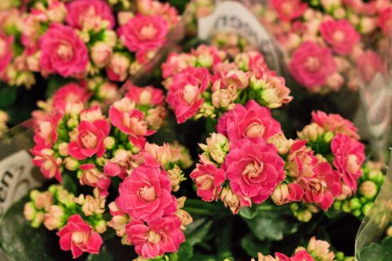 New-Covent-Garden-Flower-Market-February-2014-Market-Report-Flowerona-17.jpg?mtime=20170914103153#asset:10472
