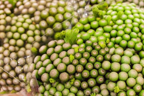 New-Covent-Garden-Flower-Market-February-2015-Market-Report-Flowerona-11.jpg?mtime=20170907141426#asset:9673