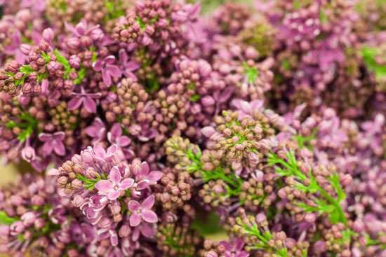 New-Covent-Garden-Flower-Market-February-2015-Market-Report-Flowerona-14.jpg?mtime=20170907141427#asset:9676