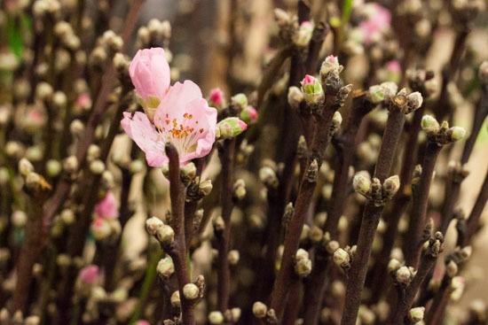 New-Covent-Garden-Flower-Market-February-2015-Market-Report-Flowerona-16.jpg?mtime=20170907141428#asset:9678