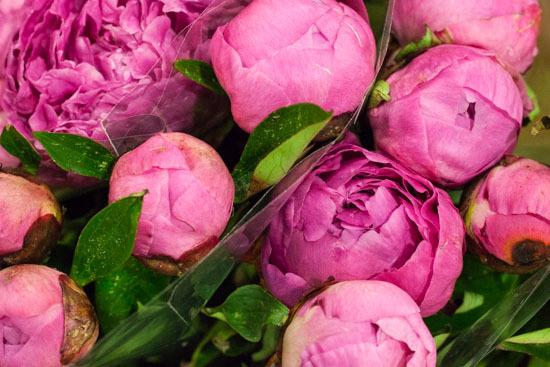 New-Covent-Garden-Flower-Market-February-2015-Market-Report-Flowerona-17.jpg?mtime=20170907141428#asset:9679