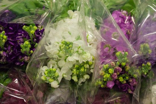New-Covent-Garden-Flower-Market-February-2015-Market-Report-Flowerona-2.jpg?mtime=20170907141942#asset:9696