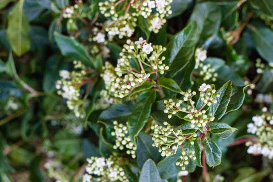 New-Covent-Garden-Flower-Market-February-2015-Market-Report-Flowerona-23.jpg?mtime=20170907141944#asset:9698