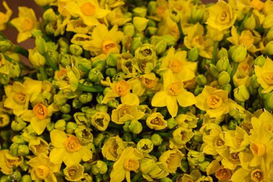 New-Covent-Garden-Flower-Market-February-2015-Market-Report-Flowerona-3.jpg?mtime=20170907141942#asset:9697