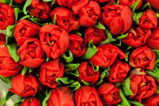 New-Covent-Garden-Flower-Market-February-2015-Market-Report-Flowerona-4.jpg?mtime=20170907141423#asset:9666