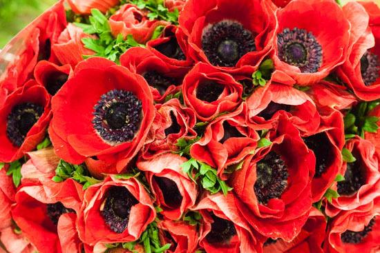 New-Covent-Garden-Flower-Market-February-2015-Market-Report-Flowerona-5.jpg?mtime=20170907141423#asset:9667