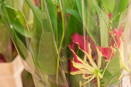 New-Covent-Garden-Flower-Market-February-2015-Market-Report-Flowerona-6.jpg?mtime=20170907141424#asset:9668